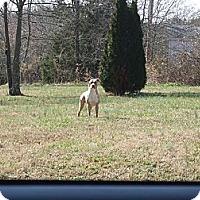 Adopt A Pet :: Bonnabelle - Charlotte, NC