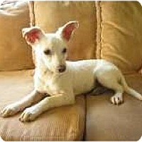 Adopt A Pet :: Frankie - San Diego, CA
