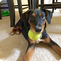 Adopt A Pet :: Snap - Gainesville, FL