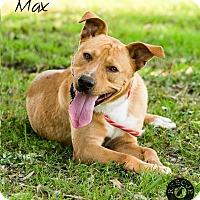 Adopt A Pet :: Max - El Campo, TX