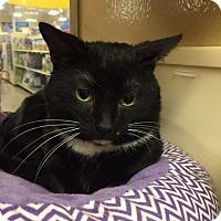 Adopt A Pet :: Welborn - Monroe, GA