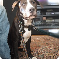 Adopt A Pet :: Mugsy - New York, NY