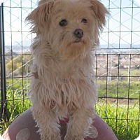 Adopt A Pet :: ISABELLA - San Pablo, CA