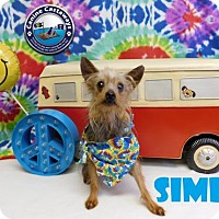 Adopt A Pet :: Simba - Arcadia, FL