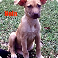 Adopt A Pet :: Nola - North Brunswick, NJ