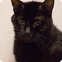 Adopt A Pet :: Nozy - Grayslake, IL