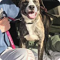 Adopt A Pet :: Arnold - Hartford, CT
