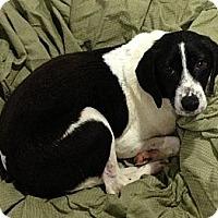 Adopt A Pet :: Lenny - Bardonia, NY
