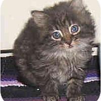 Adopt A Pet :: Sterling - Dallas, TX