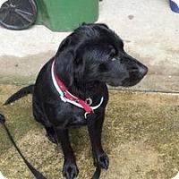 Adopt A Pet :: Jenny - Peachtree City, GA