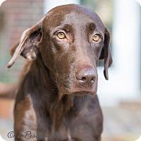 Adopt A Pet :: Maggie Moo - Cumming, GA