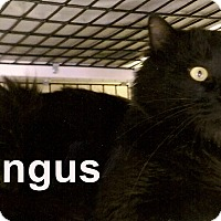 Adopt A Pet :: Angus - Medway, MA