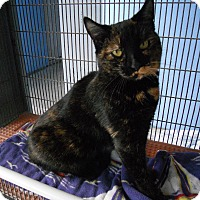 Adopt A Pet :: Torti - Newport Beach, CA