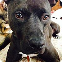 Adopt A Pet :: Piper (Adoption Fee Sponsored) - Greensboro, NC