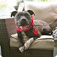 Adopt A Pet :: Cute Daisy - Los Angeles, CA