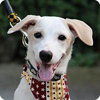Adopt A Pet :: Leica - San Francisco, CA