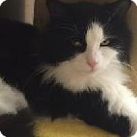 Adopt A Pet :: Ollie - Manchester, CT