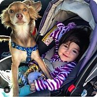 Adopt A Pet :: BUCK - Rancho Cucamonga, CA