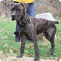 Adopt A Pet :: Polo - Westminster, MD