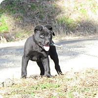 Adopt A Pet :: OAKLEY - Hartford, CT
