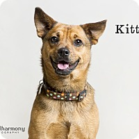 Adopt A Pet :: Kitty - Phoenix, AZ