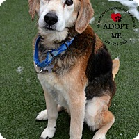 Adopt A Pet :: CLINT- Courtesy Posting - Ventnor City, NJ