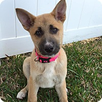 Adopt A Pet :: Tava - Ormond Beach, FL