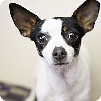 Adopt A Pet :: Molly - Sterling, KS