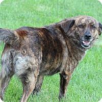 Adopt A Pet :: Libby - Aurora, IL