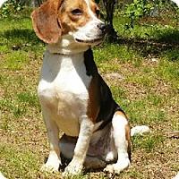 Adopt A Pet :: Max - Canterbury, CT