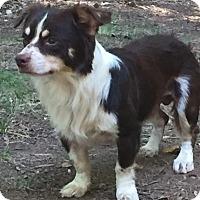 Adopt A Pet :: Dash - Matthews, NC