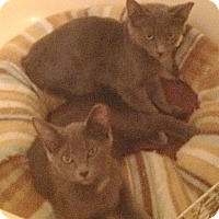 Adopt A Pet :: Rocky and Bullwinkle - Fowlerville, MI