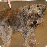 Adopt A Pet :: Frederick Rudof - Wildomar, CA