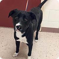 Retriever (Unknown Type) Mix Dog for adoption in McDonough, Georgia - Bijou
