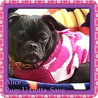 Adopt A Pet :: Alice - Chesterfield, VA