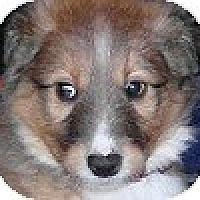 Adopt A Pet :: Toby (aka Riley) - Hamilton, ON
