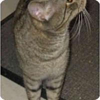 Adopt A Pet :: Marty - Catasauqua, PA