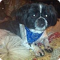 Adopt A Pet :: Aldo - Hazard, KY