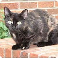 Adopt A Pet :: Tess - Wakinsville, GA