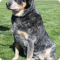 Adopt A Pet :: Shade - Phoenix, AZ