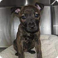 Adopt A Pet :: Lulu - East Rockaway, NY