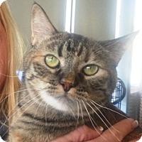 Adopt A Pet :: BeBe - Pasadena, CA