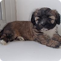 Adopt A Pet :: Lacy - La Habra Heights, CA