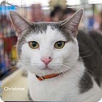 Adopt A Pet :: Christmas - Merrifield, VA