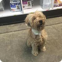 Adopt A Pet :: Fabien - Rocky Mount, NC