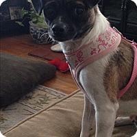 Adopt A Pet :: Natasha - Lodi, CA