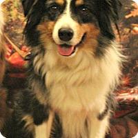 Adopt A Pet :: Loki - Starkville, MS
