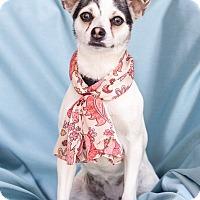 Adopt A Pet :: Betty - Chandler, AZ