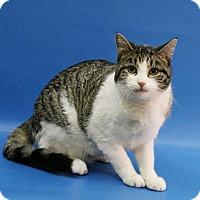 Adopt A Pet :: RJ - Overland Park, KS