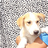 Adopt A Pet :: Xavier - Oviedo, FL